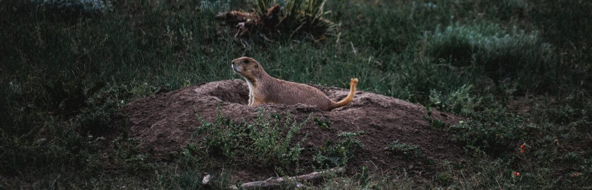 The New Groundhogs: Emerging From Isolation To The New Normal
